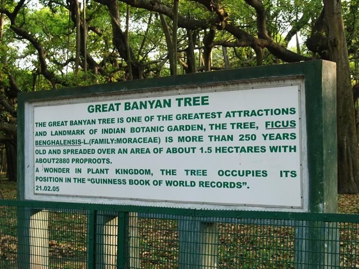 Great Banyan Tree In India